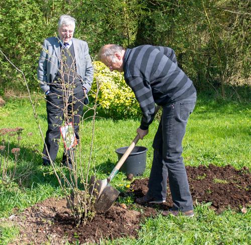 Le Rotary plante trente-sept arbres dans la Hêtraie de la ville d'Eu
